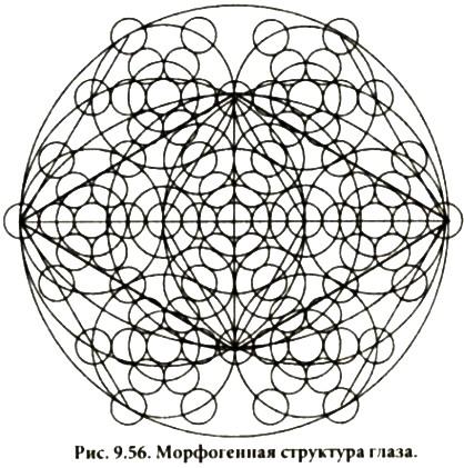 http://svet-miru2009.narod.ru/images/morfogennaya_struktura_glaza.jpg